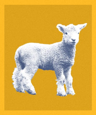 Sheep_Cafe_Opener