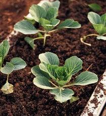 gardening-soil_300