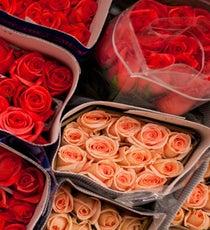 newopener10-Gaffney_Roses