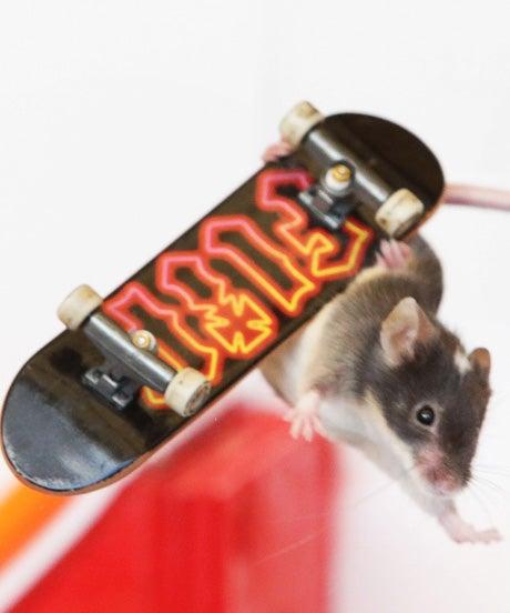 miceOP