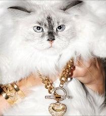 juicy-cats-opener