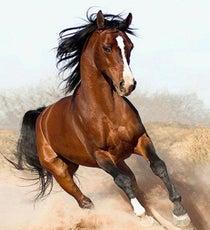 horseebooks