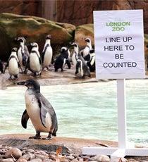 zoo-census-opne