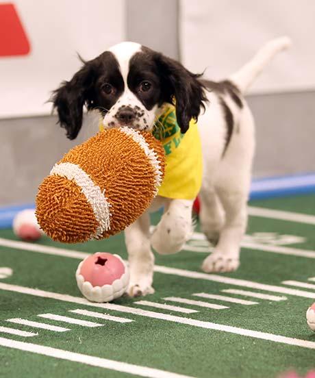 puppybowl-opener