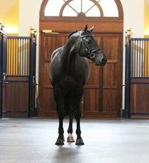 gucci-horse