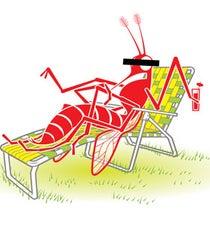 mosquito opener