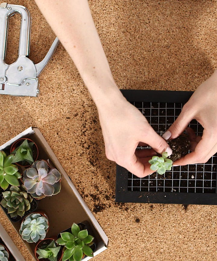 How To Succulent Garden Potted Plants Hacks Guide