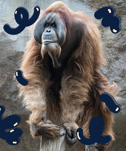 Ape personals