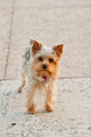 Miami Best Parks To Walk Dogs