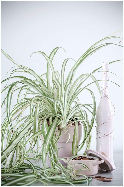 Die besten pflanzen f r zuhause die nicht kaputt gehen for Pflanzen zuhause