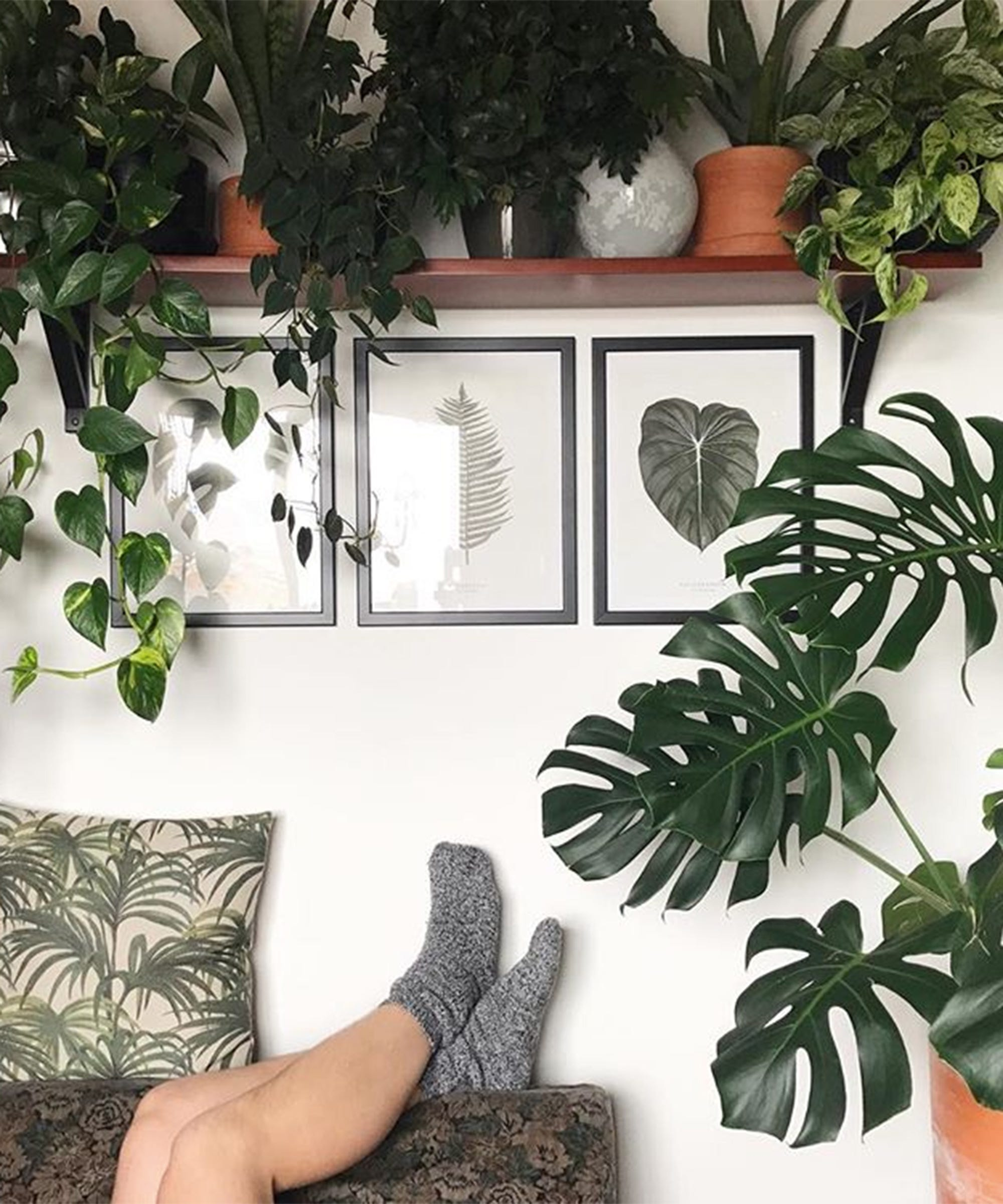 Plant Photography Tips Instagram Urban Jungle Bloggers