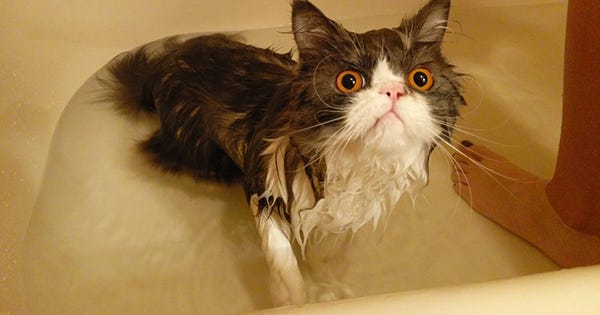 10 Cats Who Know That Baths Are Pure Evil