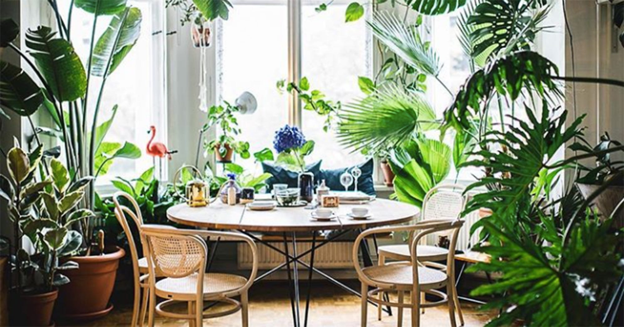 How To Take Insta-Worthy Shots Of Your House Plants