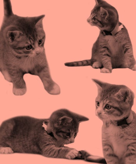 Cute Valentines Day Kitten Pictures