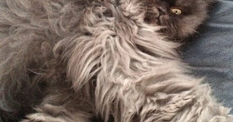 RIP, Colonel Meow — You Will Be Missed