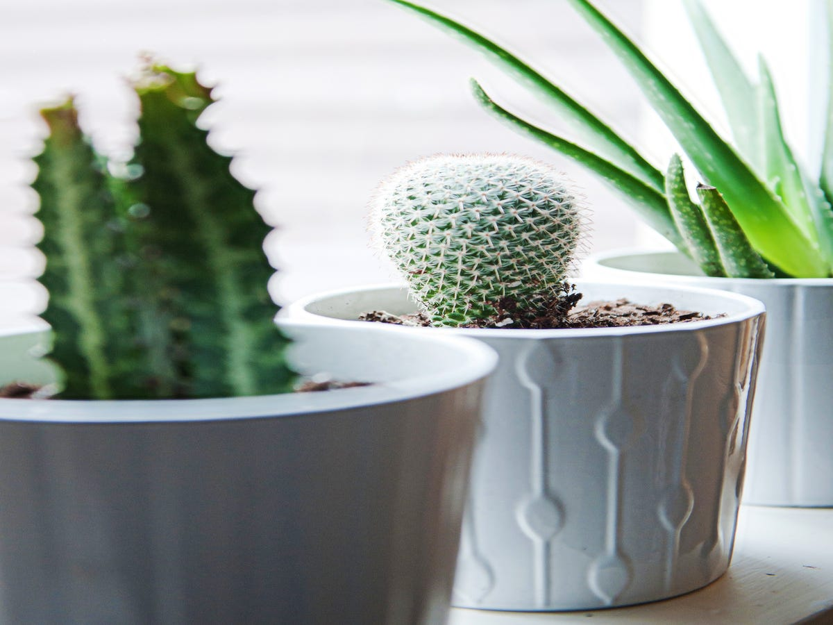 Apartment Gardening Is The Latest Trend In House Plants — But What Is It?