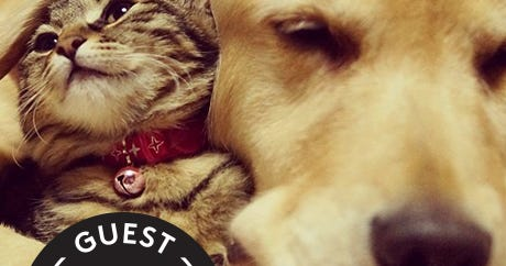 Golden Retriever Adopts Rescued Kitten, Can't Stop Cuddling
