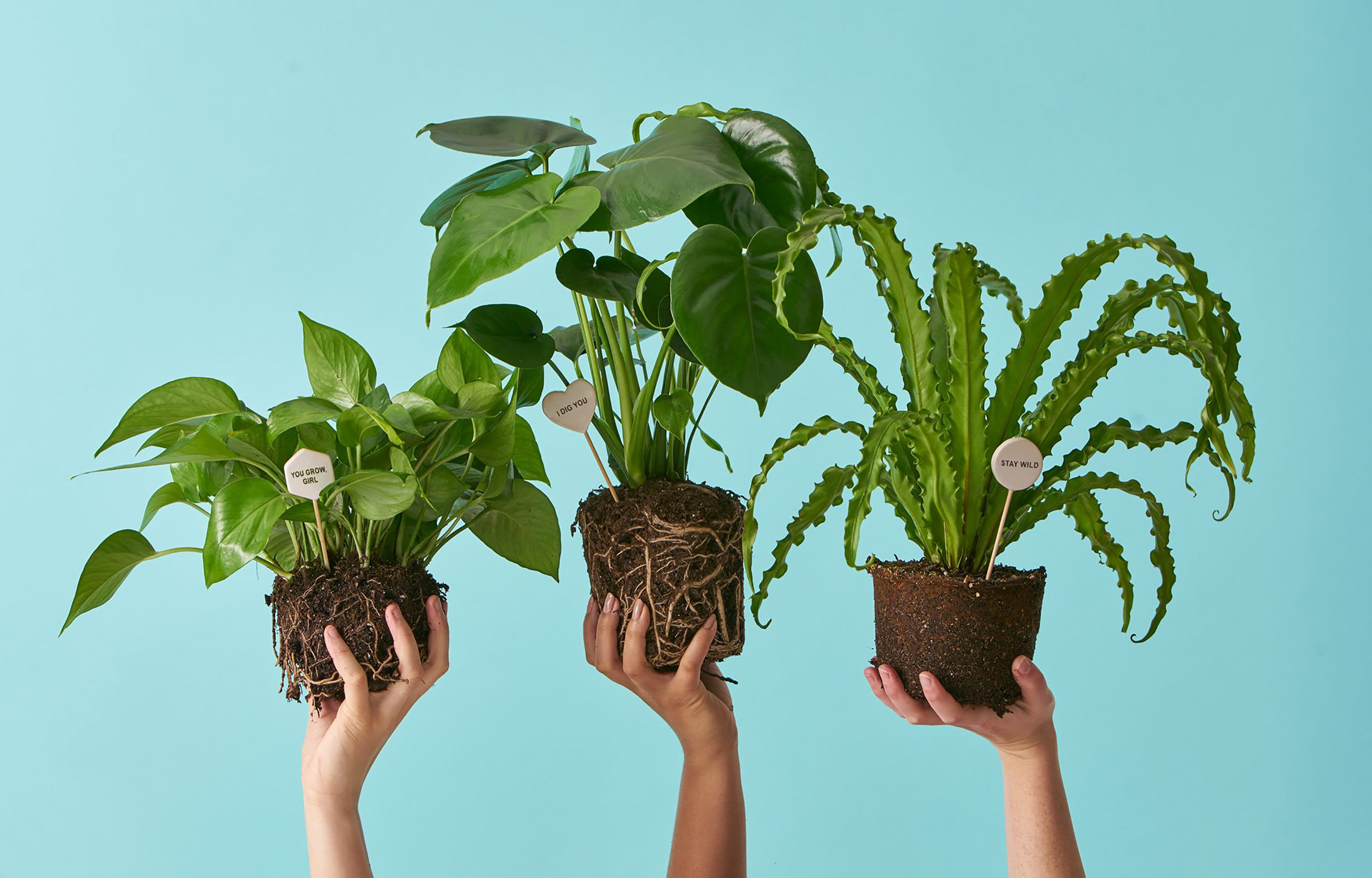 These Are The Best Places To Plants Online