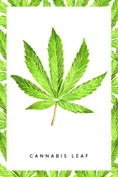 Cbd Medical Marijuana Facts Thc Effects
