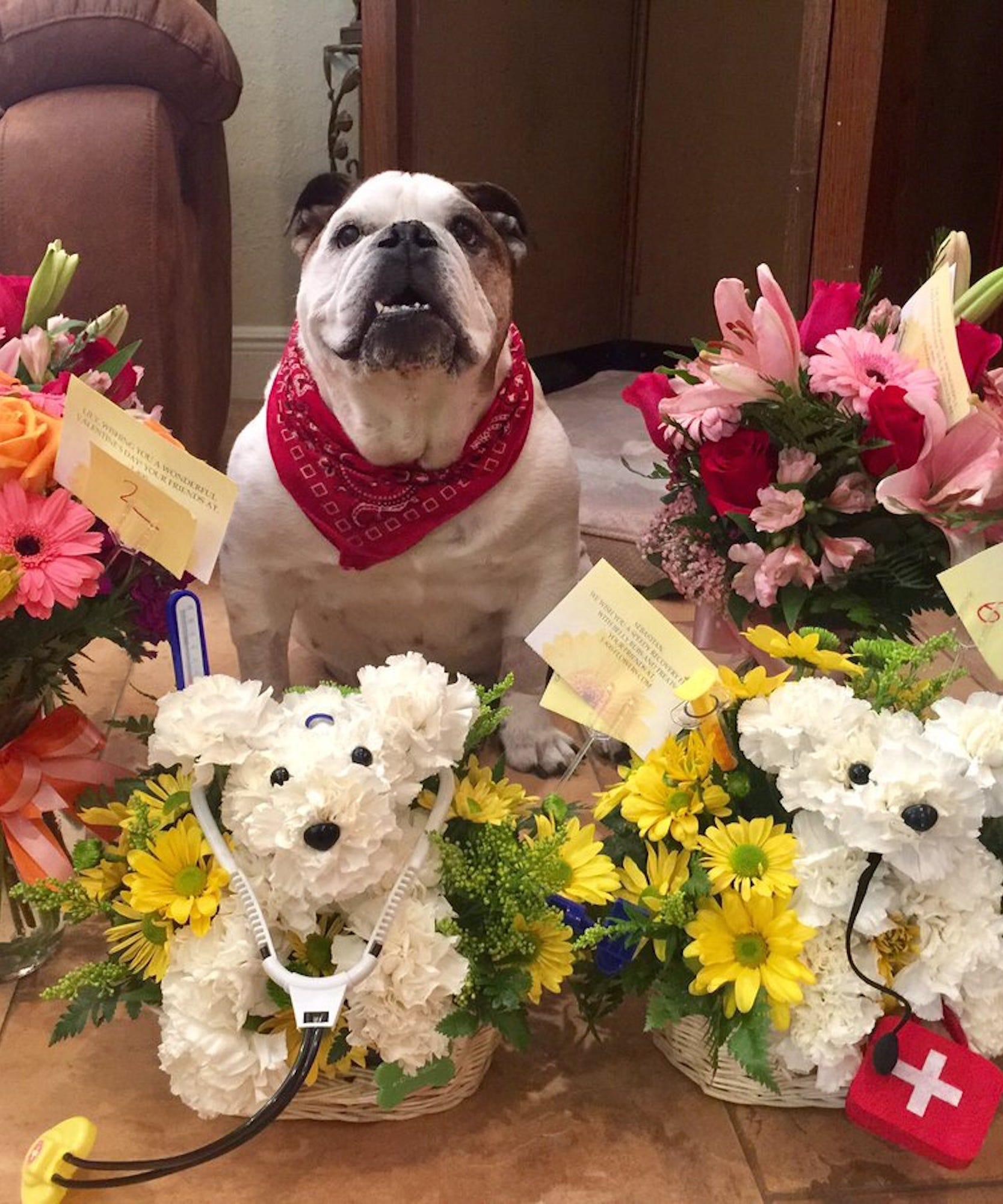 Dad orders get well gift flowers for dog izmirmasajfo Gallery