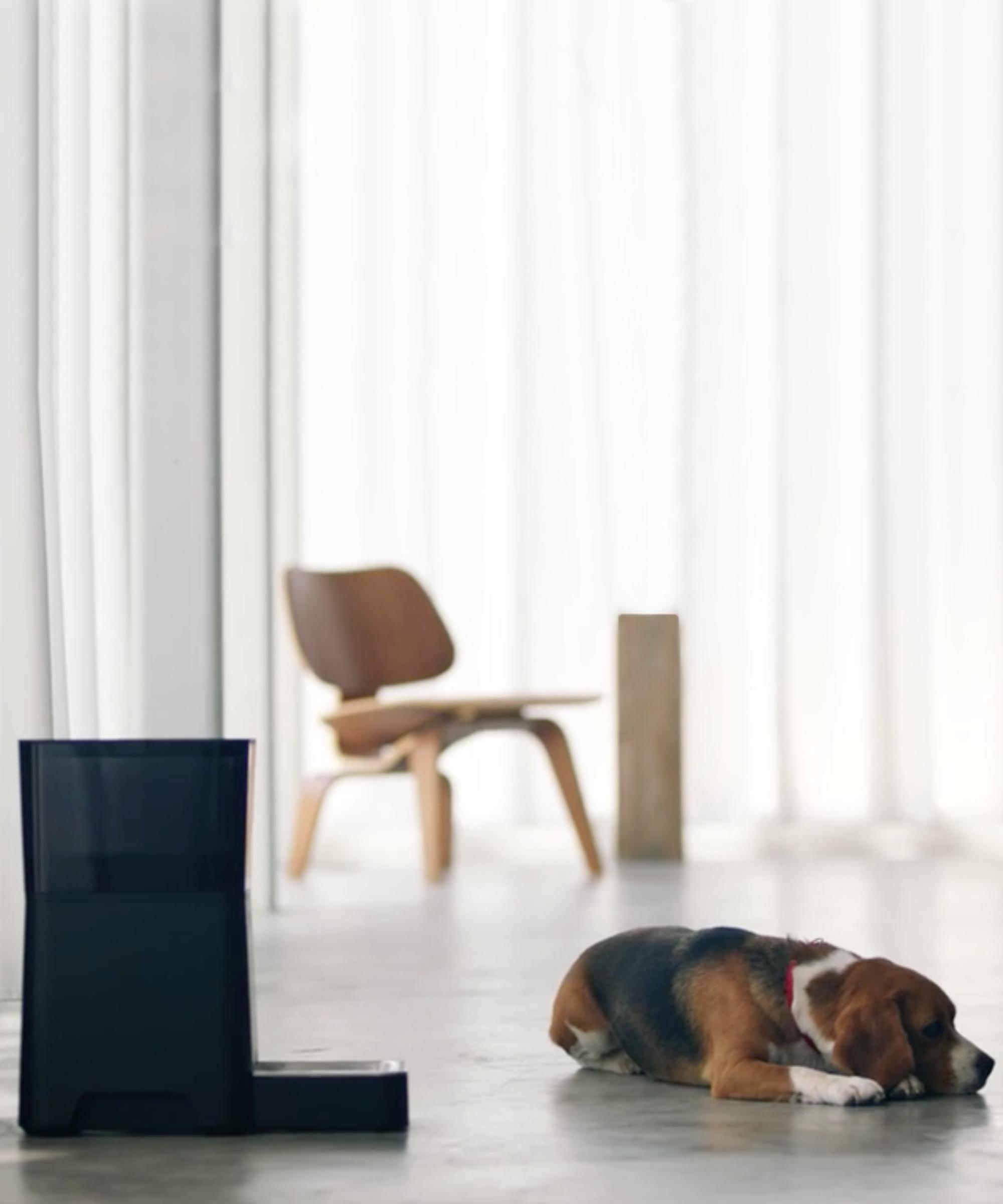 Bronze Ingenious Alte Schöne Bronze Figur Hund Boxer Making Things Convenient For Customers