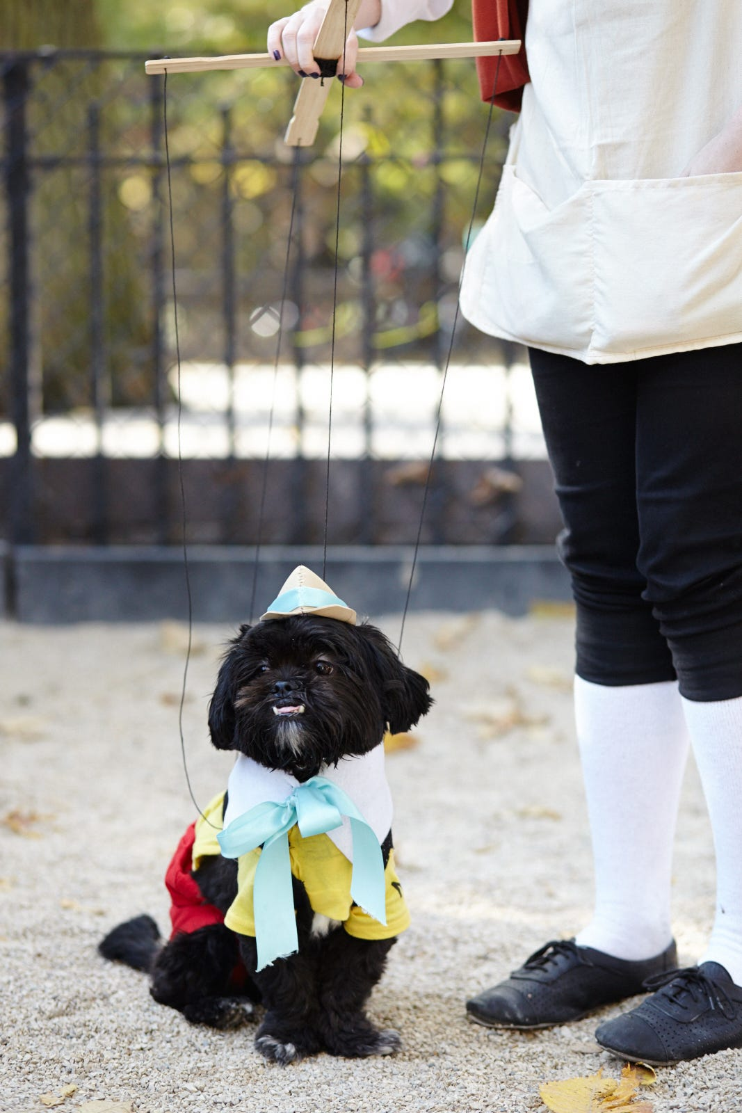dog halloween costumes pet holiday ideas