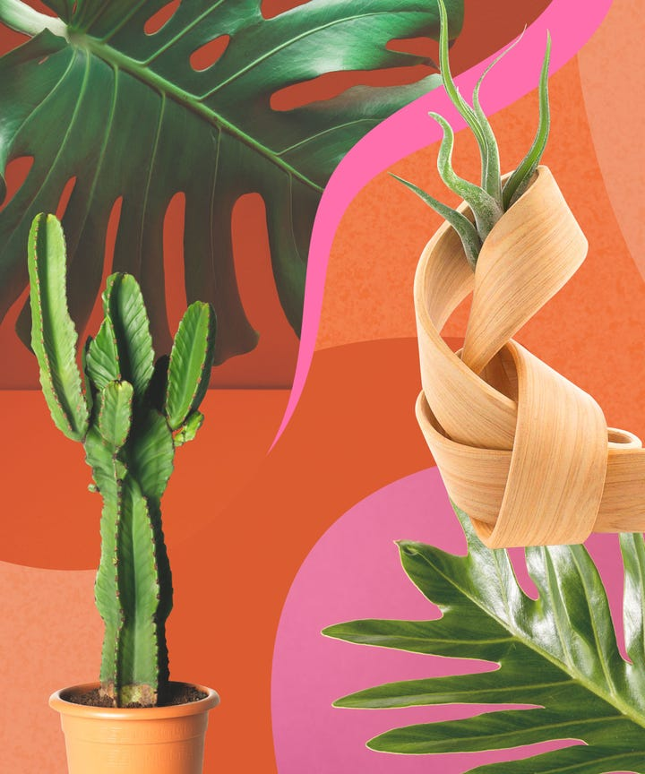 In Case You Haven T Noticed We Re A Bit Obsessed With House Plants Here At Refinery29 To Us Adding Touch Of Nature Is One The Easiest Ways