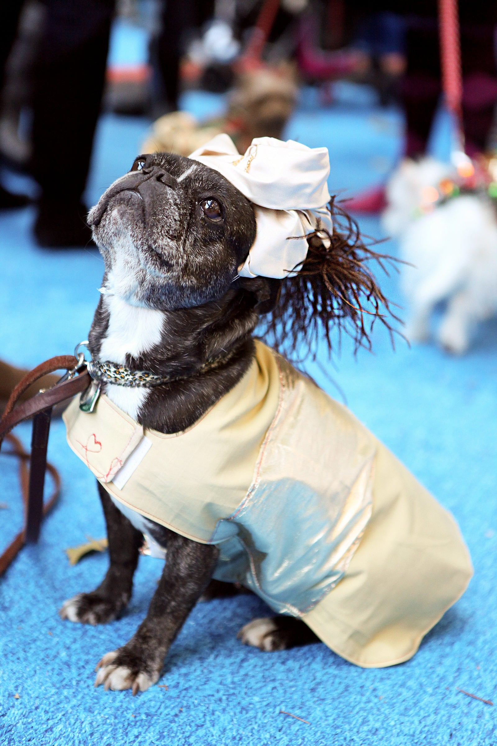 Stylish Dogs - Designer Dog Clothes And Famous Dogs
