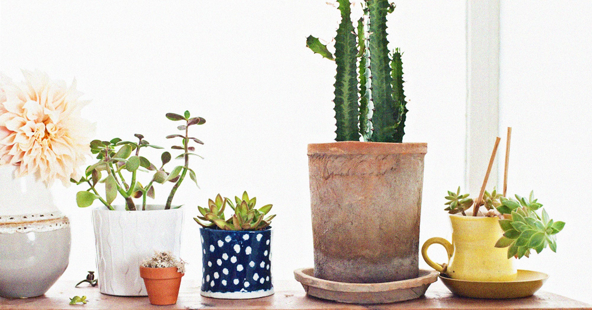 Dying Plant? How To Bring Your Houseplants Back To Life