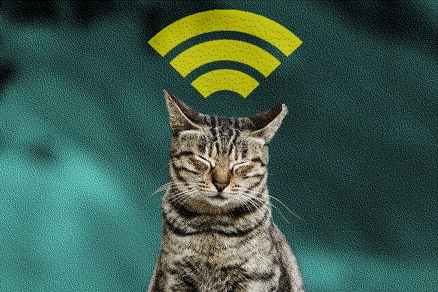 Use Cat For Free Wi Fi Warkitteh How To