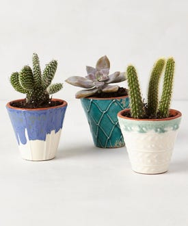 Anthropologie-Handpainted-Windowsill-Pot-$6-main