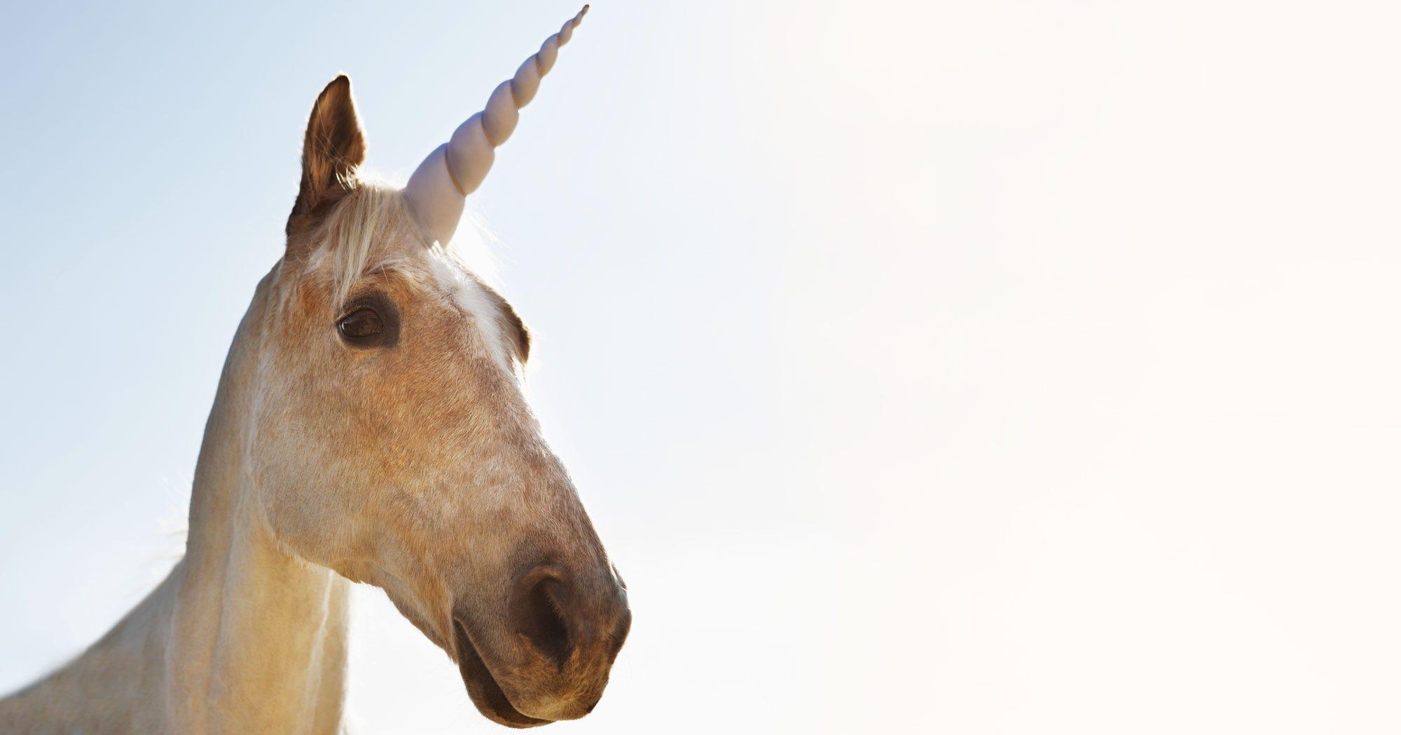 Siberian Unicorn Fossil 29000 Years Ago