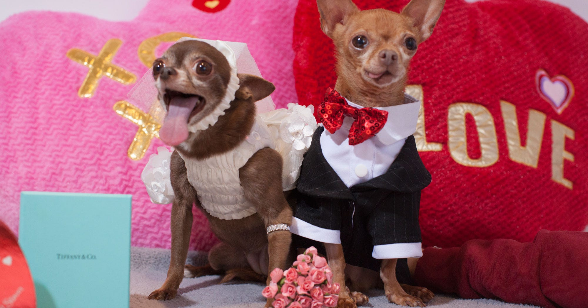 Dog Valentine Photoshoot Pictures